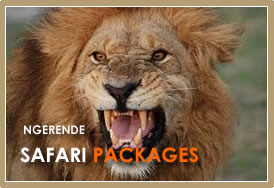 Safari Packages